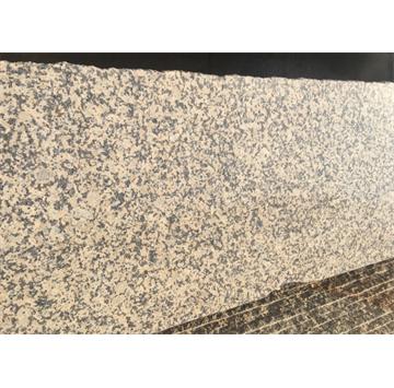 菊花黄蘑菇石