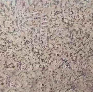 泌阳红花岗石结构致密、质地坚硬、耐酸碱、耐气候性好,可以在室外长期使用。花岗岩的特性优点还包括高承载性,抗压能力及很好的研磨延展性,很容易切割,塑造,可以创造出薄板大板等,可做成多种表面效果–抛光、亚光、细磨、火烧、水刀处理和喷砂等。